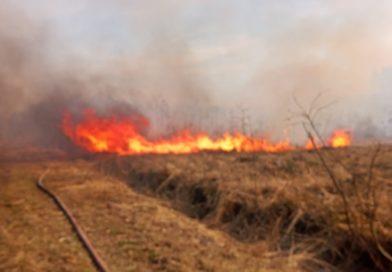 Duży pożar lasu w Nadleśnictwie Włodawa. Ogień strawił ponad 33 ha powierzchni